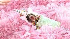 Fotógrafa de Canela lançou projeto de ensaio newborn com animais (Foto: Reprodução/RBS TV)