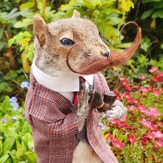 Taxidermy Squirrel Taxidermy, Squirrel, Dinosaur Stuffed Animal, Unique Jewelry, Handmade Gifts, Animals, Vintage, Etsy, Kid Craft Gifts