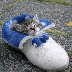 Snug as a bug in a rug! Or should I say, a kitten in a slipper !!