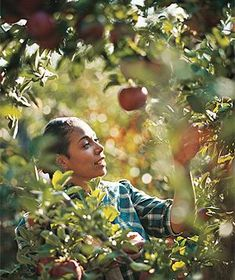 1000 images about apple picking on pinterest apples orchards and