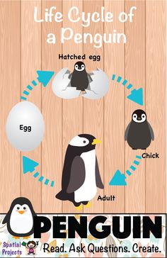 Free Nonfiction Unit on Penguins. Cycle For Kids, Life Cycle Craft, All About Penguins, Expository Writing, Penguin Craft, Arctic Animals, Reading Passages, Life Cycles, Writing Activities