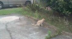 souple le chat. Un gif animé drole