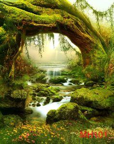 Fairy Tale Jungle Vinyl Backdrop Photography Prop Photo Background 6x9ft MH101 #UnbrandedGeneric #Fairtalewonderland