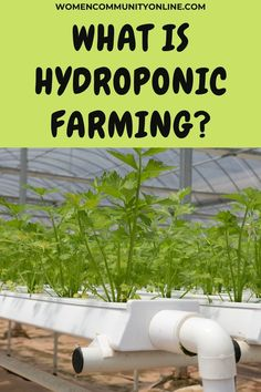 We all have seen fruits and vegetables growing in the soil, but it is surprising to grow them in water, without soil. The hydroponic technique is a technique of growing plants in water under specific conditions and factors. #hydroponicfarming #hydroponics #hydroponic #hydroponicsystem #hydroponicgarden #hydroponicfarm #urbanfarming #aquaponics #hydroponicgardening #aquaponicsystem #indoorfarming #agriculture #verticalfarming #healthyfood #hydroponicsystems #aquaponicsresearch #growyourown Indoor Farming, Hydroponic Farming, Hydroponics System, Aquaponics, Growing Vegetables, Growing Plants, Fruits And Vegetables, Vertical Farming, Online Blog