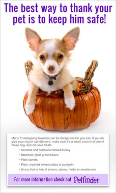Share this to keep pets safe this Thanksgiving! Click through to watch our Thanksgiving safety video.