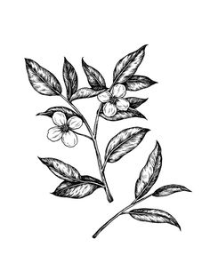 "milk-paws: "" Had fun with some simple tea leaf illustrations for Emily. These are my favorites out of a larger set. """