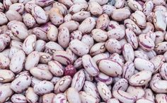 Beans, Taylor Dwarf Horticultural Shelling Bush Bean Seeds - Heirloom from Pre-1800s