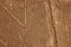 Nazca lines, the Spider    Peru