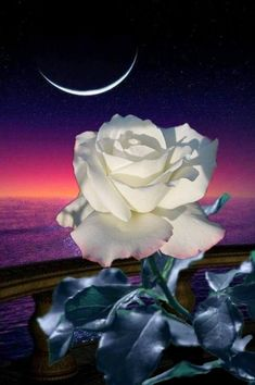 By Artist Unknown. Love Wallpapers Romantic, Beautiful Flowers Wallpapers, Beautiful Rose Flowers, Romantic Flowers, Beautiful Moon, Flowers Nature, Pretty Flowers, Flower Phone Wallpaper, Sunset Wallpaper
