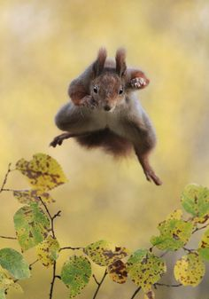 Kungfu Squirrel by Julian Rad