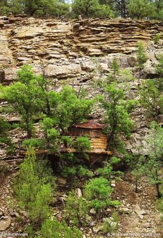 The treehouse is supported on Garnier Limbs which allows the trees bear weights far beyond what they could without the device. More, including video at www.naturalhomes.org/timeline/pecos-treehouse.htm
