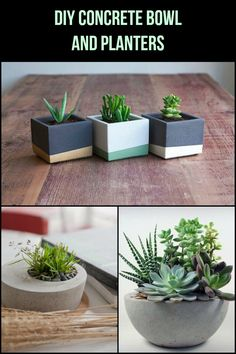 These concrete bowls and planters would look beautiful inside your home.