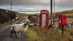Credit: Aidan Maccormick 'Stuck in Friday afternoon rush-hour traffic on the Isle of Mull whilst dog-sitting'