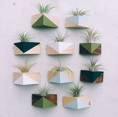 Triangle Magnet w/Air Plant – Decor Style 2019 Wooden Shelf Design, Wooden Shelves, Rope Shelves, Wall Shelves, Plant Wall, Plant Decor, Wall Of Plants, Air Plants, Indoor Plants