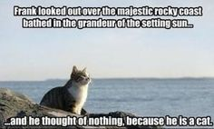 "Cat Logic  I looked at the picture before I read the caption and my first thought was,""ooohhhh!!!!! It looks like the scene at Bad Wolf Bay with rose and ten!"" I was so pumped, I was SURE it was going to be Whovian..."