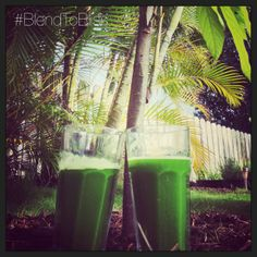 2 Green Juices Under Cacao Trees~  Ingredients: 6-9 Stalks of Celery 3 Large Cucumbers A Handful of Kale A Handful of Cilantro A Handful of Parsley 1/2 Lemon  How To Make:      Step 1⃣ Run all the ingredients through a juicer and serve. Option 2⃣ If you don't have a juicer... Blend all the ingredients, strain and serve. #blendtobliss #rawjuice #superfuel #superjuice #radianthealth