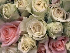 # Rose Flower Bloom Hd Flowers, Desktop Windows, Iphone Mobile, Wallpaper Backgrounds, Apple Iphone, Bloom, Plants, Roses, Pink