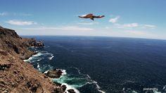 23. Todos Santos, Baja California Sur. El Halcón peregrino puede volar a más de 300 km por hora #BajaCaliforniaSur