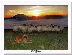 Rebaño de pocas ovejas durmiendo en el monte Saibi. El perro tumbado con las orejas tiesas y la lengua fuera mirando al pastor. La noche que se va y amanece por el monte Anboto, Ipizte y Orisol. La niebla que cubre Urkiola y los alrededores. El frío
