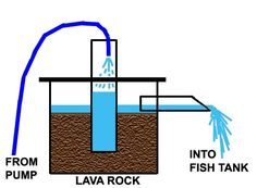 Aquaponics- Using (decorative) fish waste as nutrients