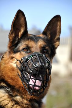 Your dog can still pant and breath with this type of muzzle. The nylon grooming muzzles used by vets, does not allow them to pant while they are under stress.