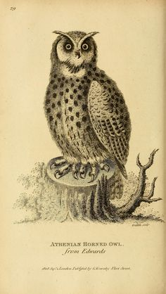v. 7, pt. 1 (1809) - General zoology, or Systematic natural history, - Biodiversity Heritage Library