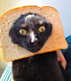 Bread cat lmao