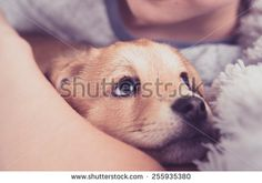 Young Puppy with New Family Member