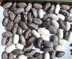 Tekomari beans