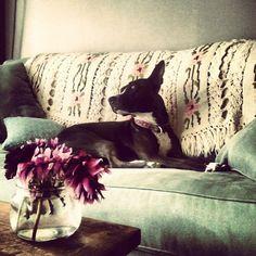 Kim's favourite pets on furniture 2013 - part1 - desire to inspire - desiretoinspire.net