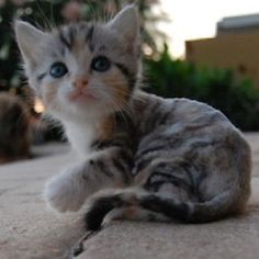 I love the color of this kitten !