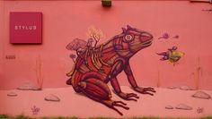 Sego - Puerto Rico 2012