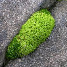 dark & light green Moss