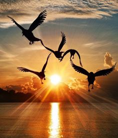 Freedom vibes Seagulls on a morning sunrise Photo by – All Pictures Sunset Photography, Amazing Photography, Landscape Photography, Photography Ideas, Morning Photography, Poster Photography, Travel Photography, Nature Pictures, Beautiful Pictures