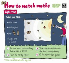 Tutorials for wildlife watching (UK site). Great activities for kids!