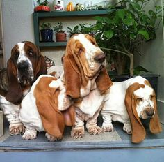 Big gathering of wrinkles