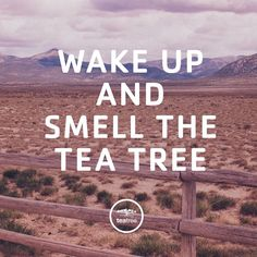 You'll be ready to hit the ground running! 🏃🏻#WordsToLiveBy #GoodMorning #TeaTreeHairCare Hairdresser Quotes, Paul Mitchell, Personal Portfolio, Cover Pages, Tea Tree, Wake Up, Quote Of The Day, Good Morning, Hair Care