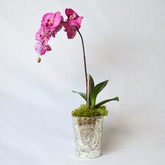 Orchid in Vintage Mercury Glass