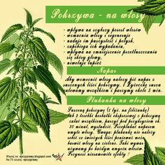 Botany, Hair Hacks, Hair Trends, Home Remedies, Hair Care, Food And Drink, Herbs, Drinks, Fitness