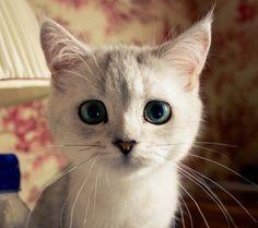 cuteanimalsaww:  Follow For Cute Animals Everyday
