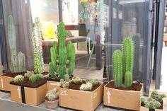 KARWEI | Cactussen in alle soorten en maten in de tuin. #woonbeurs #karwei #inspiratie