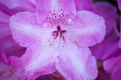 DSC_0767 | Explore nickcoburn62's photos on Flickr. nickcobu… | Flickr - Photo Sharing!