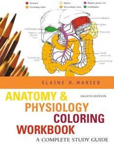 Image Result For Anatomy Physiology Coloring Workbook