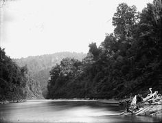 View of part of the Whanganui River. Photograph taken by Charles Whitmore Babbage between Quantity: 1 b&w original negative(s). New Zealand, Coast, River, Landscape, Outdoor, Outdoors, Rivers, Landscape Paintings, The Great Outdoors