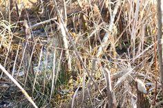 tracks - Spuren von einem neuen Freund Nature Pictures, Plants, Garden, New Friends, Garten, Nature Photography, Planters, Gardening, Outdoor