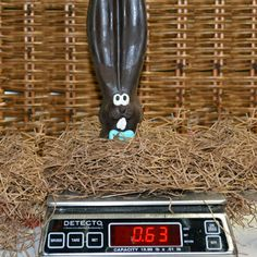 10 ounces of solid #chocolate love. #allears #Easter