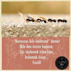 #fuzuli
