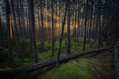 Acadia National Park - Blackwoods Campground