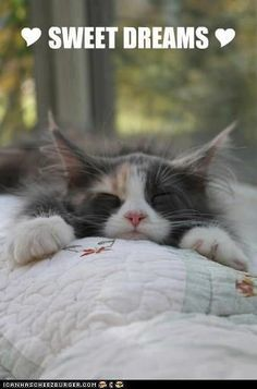 Goodnight Angel❤️ sweet dreams I LOVE YOU❤️
