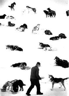 Iditarod rest stop